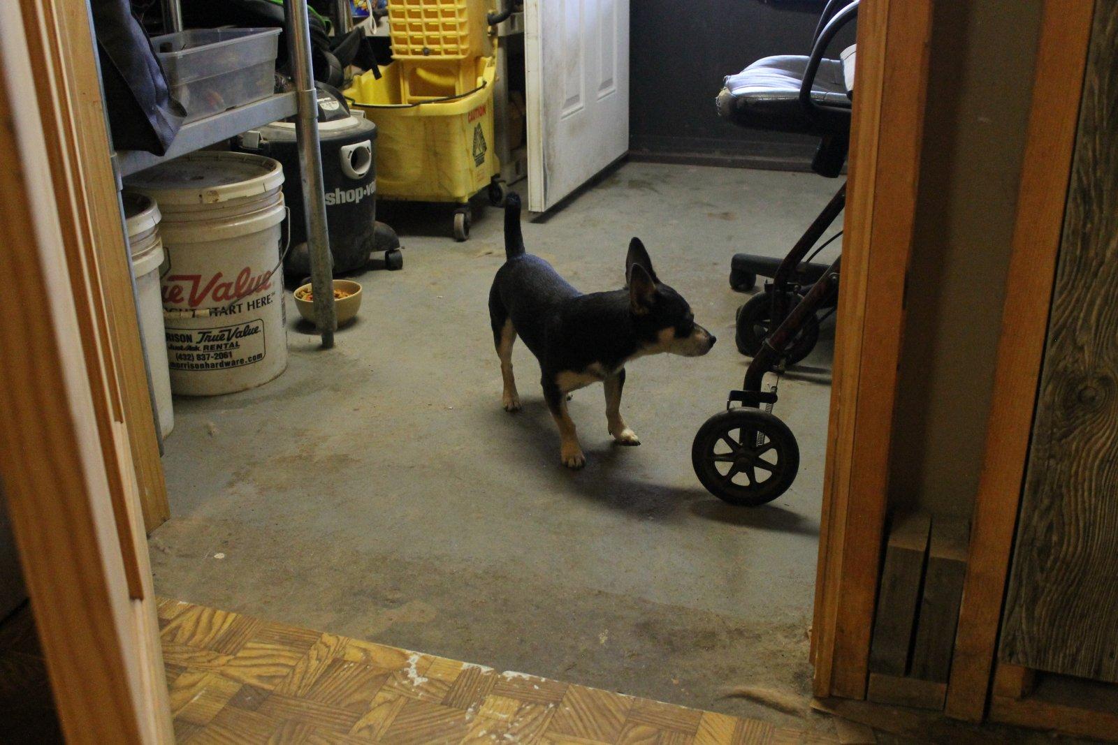 Found Doggy