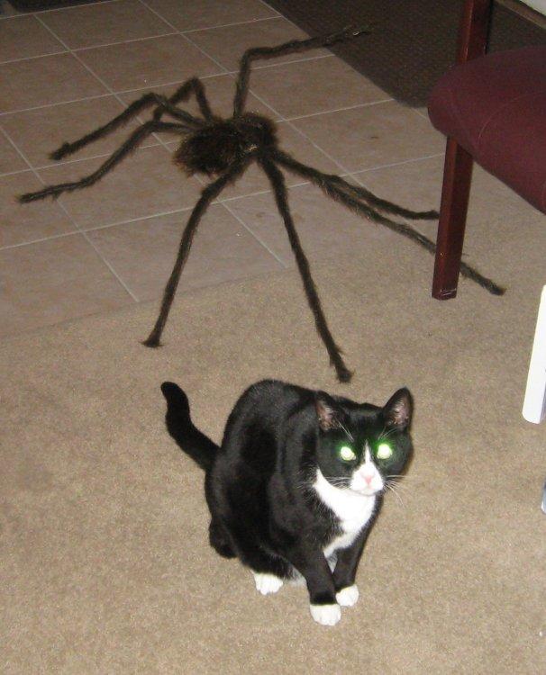 casper-spider-halloween2.jpg